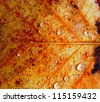 Raindrops on the surface of an autumn leaf - stock photo