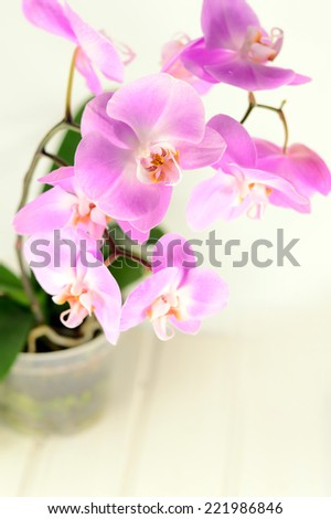 ?ranch of a beautiful pink orchid
