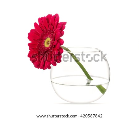 Red gerbera in a round glass vase, isolated on white - stock photo