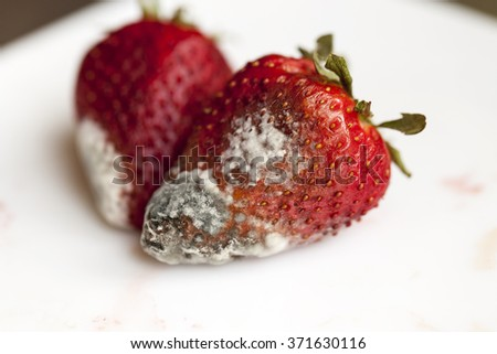 red ripe strawberries, moldy, spoiled strawberries, close-up - stock photo