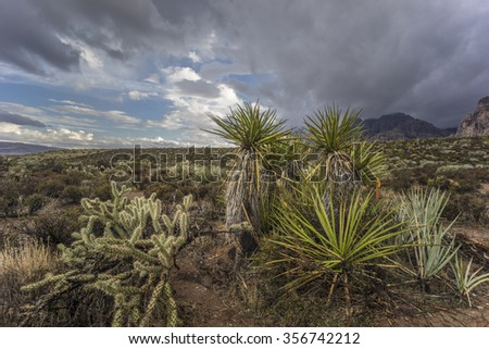 Red Rock Canyon National Conservation Area  during rain storm
