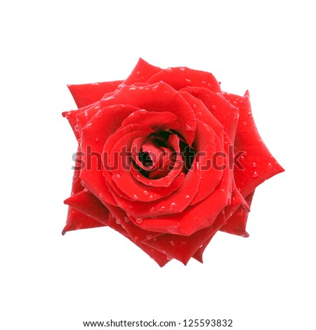 Red rose with dew drops, top view. Isolated on white background - stock photo