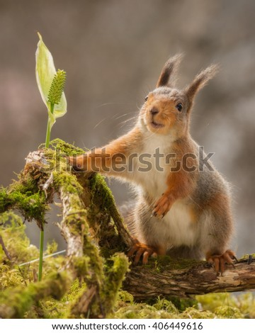 red squirrel standing on moss with flower - stock photo
