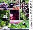 red wine in vineyard, saved clipping path - stock photo