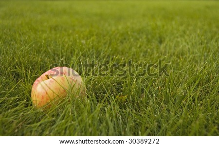 red yellow apple on the green grass - stock photo