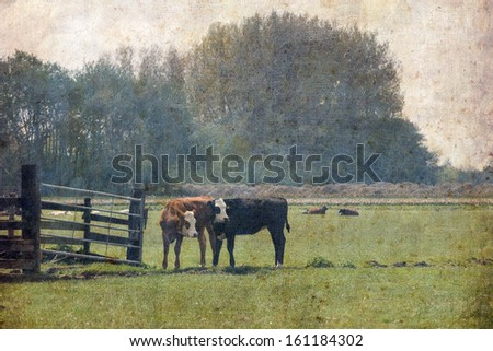 Retro style image of rural landscape, calves in the meadow - stock photo