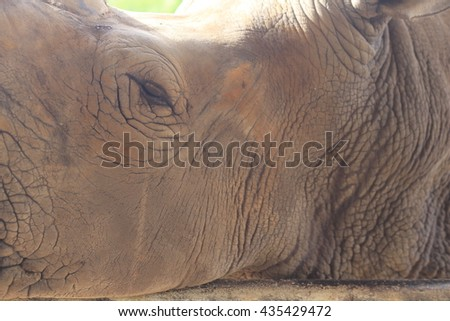 rhinoceros eyes - stock photo