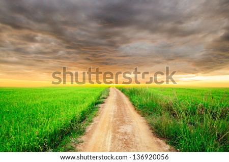rice field and cloudscape - stock photo
