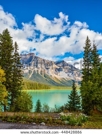 Rocky Mountains, British Columbia, Canada. Blossoming glade in coniferous forest. Beautiful autumn day on the Emerald Lake - stock photo