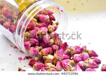 rose buds  - stock photo