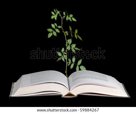 Rose seedling growing from an open book