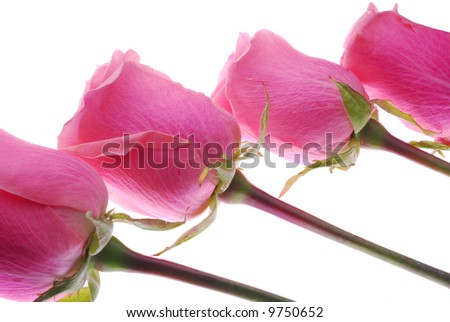 4 Rosese lay in line - stock photo