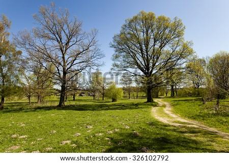 rural Dirt road in the spring season. oak grows near - stock photo