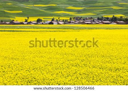 rural landscape - a village located at rape field - stock photo