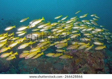 """""""school of fish on coral reef"""" Mural. The pond paper painting concept - stock photo"""