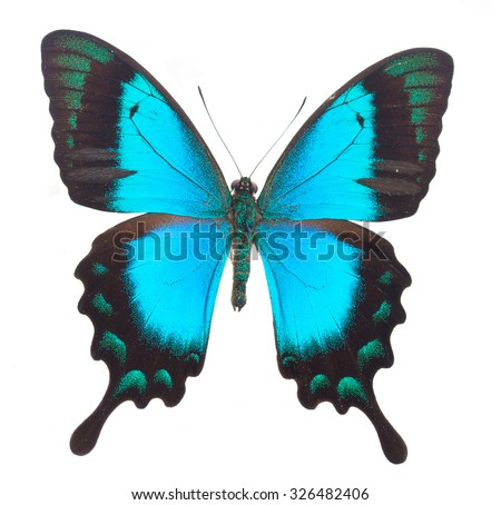 Sea Green Swallowtail butterfly isolated on white background - stock photo
