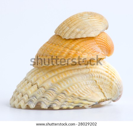 3 sea shells isolated on white
