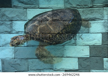 """sea turtle"" Mural. The brick painting concept - stock photo"