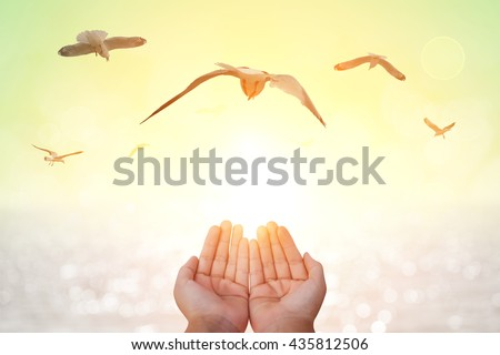 seagull  bird flying out of two hand and freedom concept and freedom background - stock photo