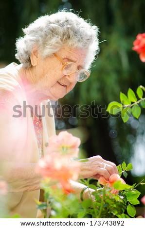 Senior woman with garden roses. Springtime  - stock photo