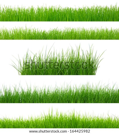 set of green grass isolated on white - stock photo