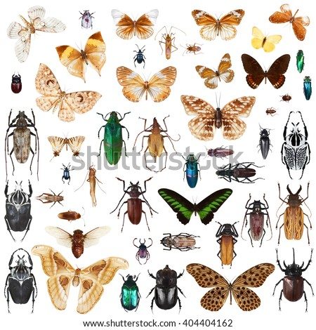 Set of insects on white background with clipping path - stock photo