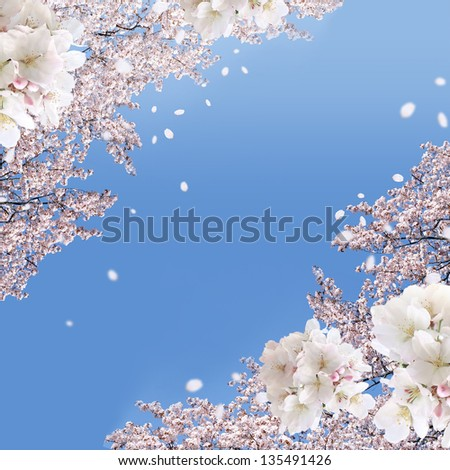 Image result for blossom falling image