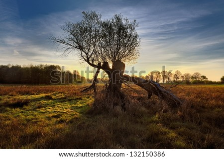 Silhouette of a willow tree with the sun behind the tree - stock photo