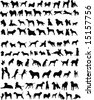 100 silhouettes of different breeds of dogs - stock vector