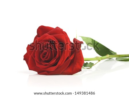 single red rose, isolated on white background - stock photo