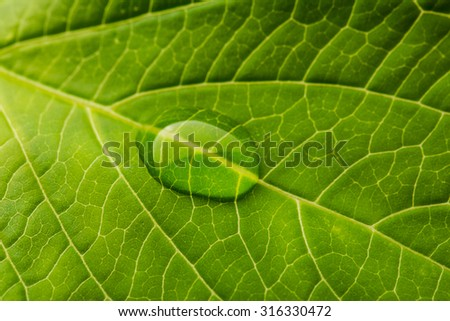 single waterdrop on a green nature leaf - stock photo