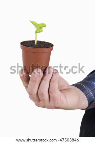 Small plant in the hand.