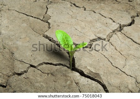 small sprout growing on cracked earth. - stock photo