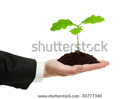 Small sprout of oak in the hand of businessman isolated on the white background. - stock photo