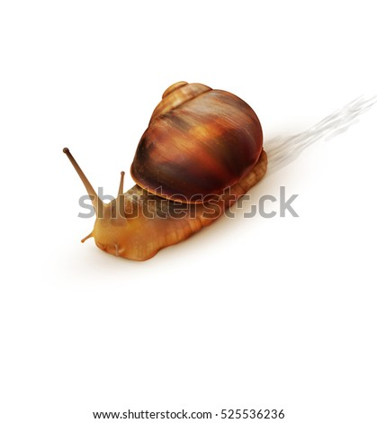 snail crawling on a white background.
