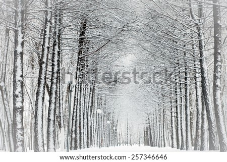 Snow-covered branches of trees in park