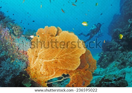 """Soft coral in Similan, Thailand"" Mural. The pond paper painting  concept"