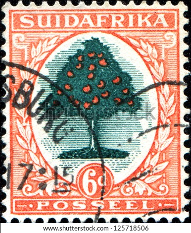 SOUTH AFRICA - CIRCA 1926: A stamp printed in South Africa shows Orange tree (Citrus sinensis - Rutaceae), circa 1926