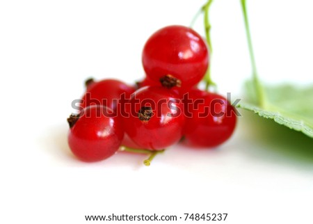 sprig of red currants, isolated on a white background