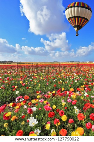 Spring Day in Israel.  Bright striped balloon flies over a field of colorful garden of buttercups. - stock photo