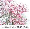spring magnolia tree - stock photo
