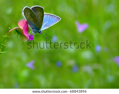 Spring meadow background with blue butterfly - stock photo