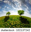 Spring trees on dandelions field in the sunset - fisheye shot - stock photo