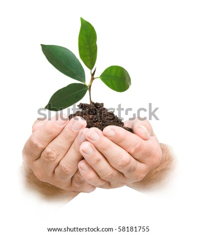 sprout in palms as a symbol of nature protection - stock photo