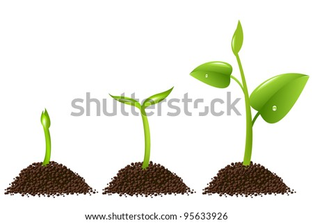 3 Sprouts Isolated On White Background - stock photo