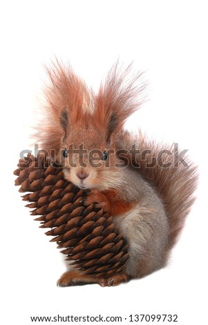 squirrel with the cone on a white background - stock photo