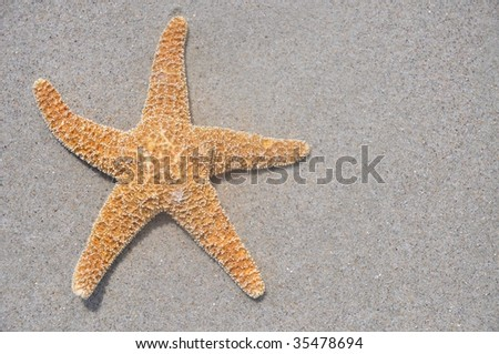 Starfish / Sea Star on beach, useful as a background, room for copy space - stock photo