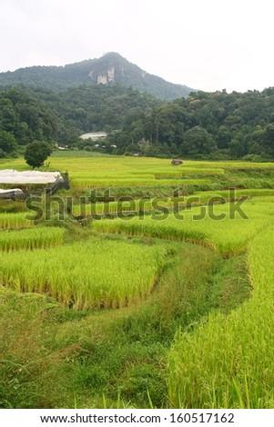 Step paddy field, Chiang Mai, Thailand - stock photo