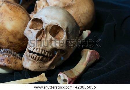 Still life of skull ,many skull on the same place, Genocides  - stock photo