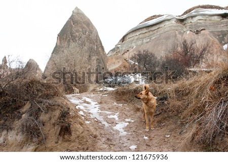 Stray dogs in the winter national park of Cappadocia - stock photo